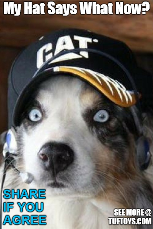 funny picture of dog looking shocked at the revelation of the word on his hat