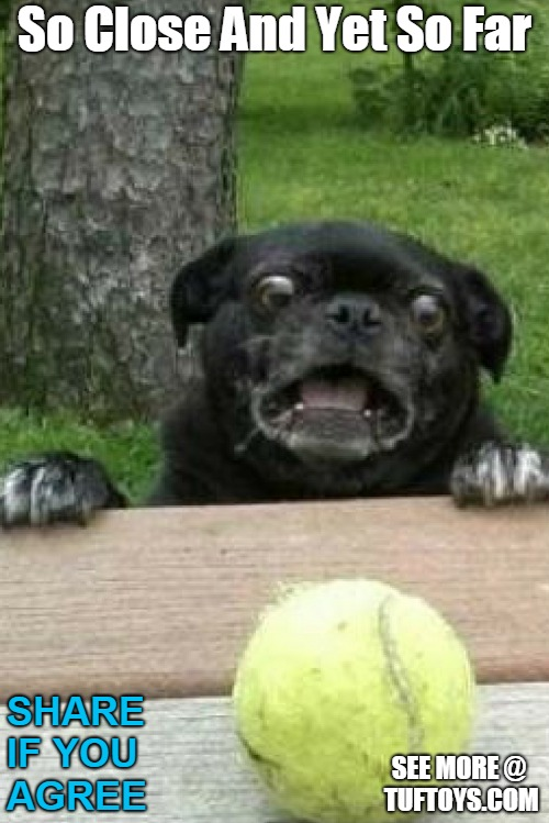 funny picture of dog trying to get tennis ball but slipping off table