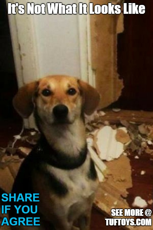 funny picture of dog with a lot of explaining to do, after tearing up the place