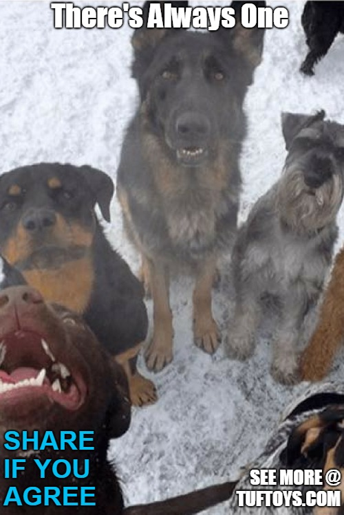 funny picture of five dogs posing for a photo with one ruining it for everyone