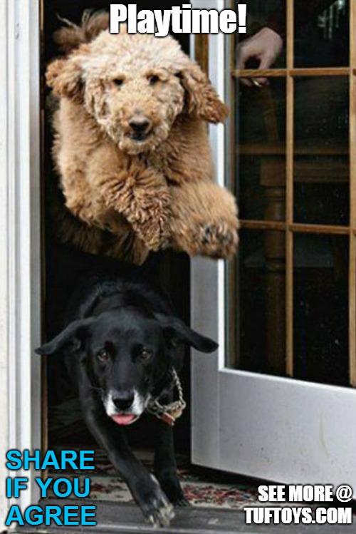 funny picture of two dogs bursting out of the door when opened for playtime