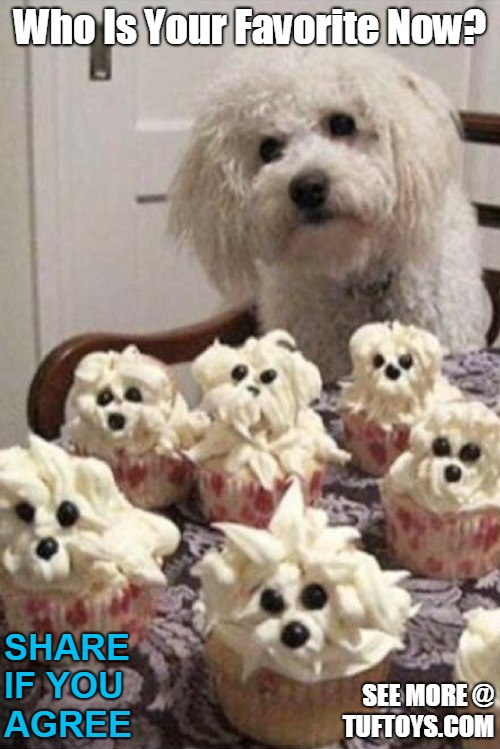 funny puppy pic with cup cakes