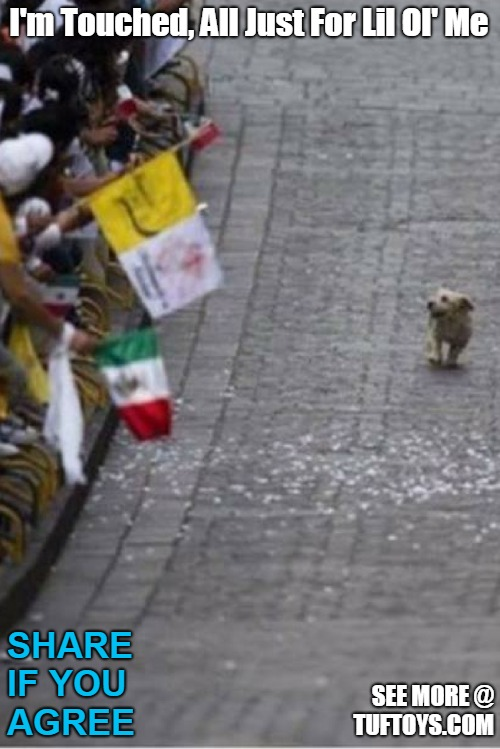 funny picture of a small dog under the illusion a crowd of people are gathered especially for him