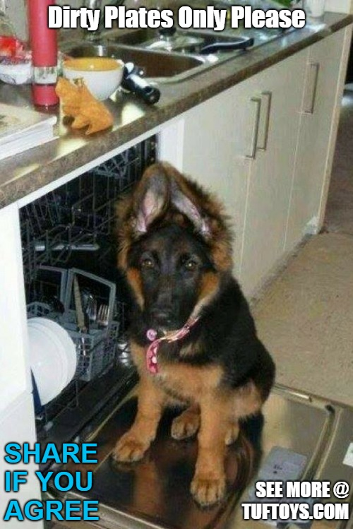 german shepherd dog waiting near washing machine