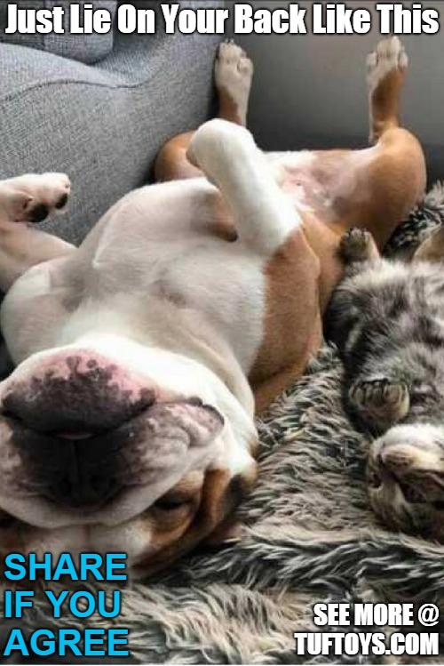 hilarious picture of a bulldog giving tips to his cat buddy on how to relax on weekends