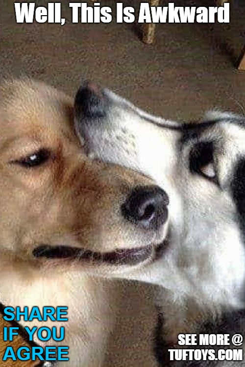 pic of funny dog with jaws wrapped around another dogs head