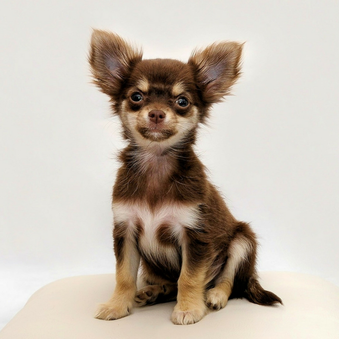 Small Size Dog Facts Information Names