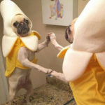 Funny Dog Memes – Part 2