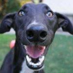 Funny Dog Memes – Part 3