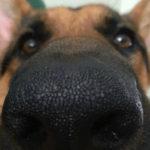 Funny Dog Memes – Part 6