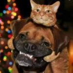 Funny Dog Memes – Part 7