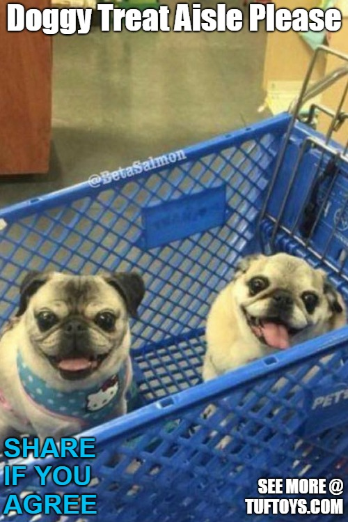 two delightful pugs in a shopping cart keen on hitting the dog treat aisle asap