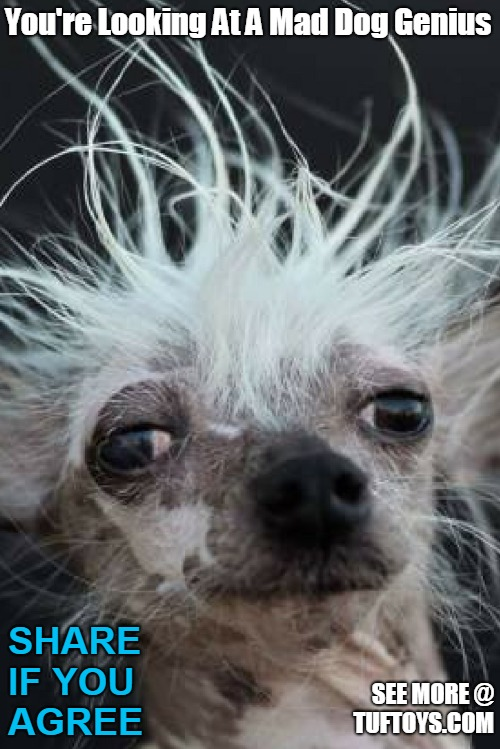 ugly dog with crazy hair