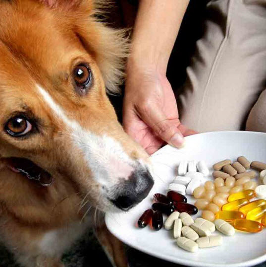 Dog-supplement-pills