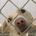 7 Things To Think About Before Adopting A Dog