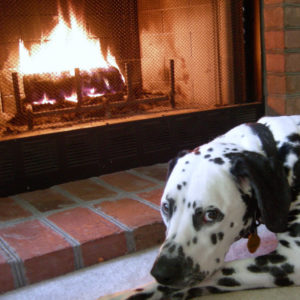 dog and fireplaces