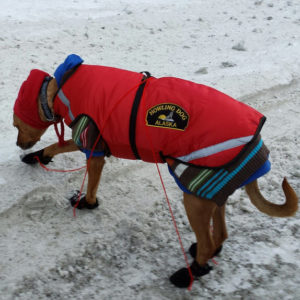 dog in winter coat