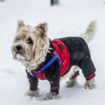 Top 10 Winter Safety Tips For Dog Owners