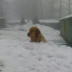 older Dog_in_snow