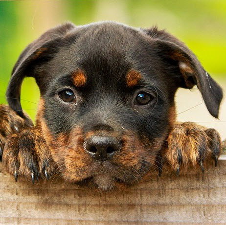 bemused cute doggy